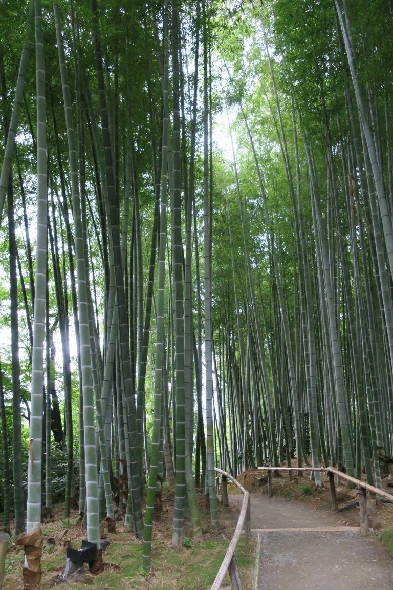bamboo-grove